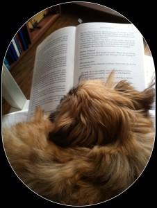 Moon beim Lesen